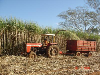 plantacoes-de-cana-12