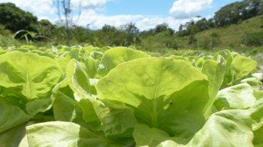 agroecológico2